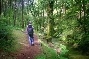 Walkers in Brechfa Forest